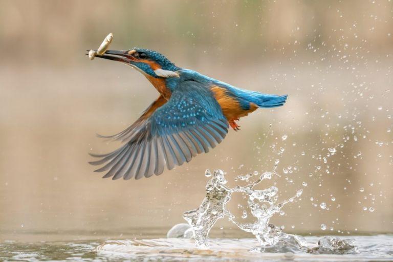 Wildlife Photography Training Courses. Kingfisher hide photography