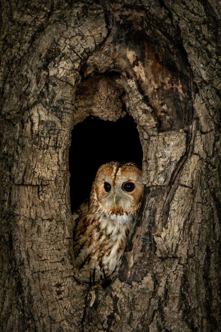 Wildlife Photography Training Courses.